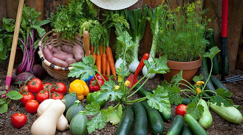 Anbau von Zucchini, Gurke, Tomaten, Karotten, Kartoffeln und Kräutern.