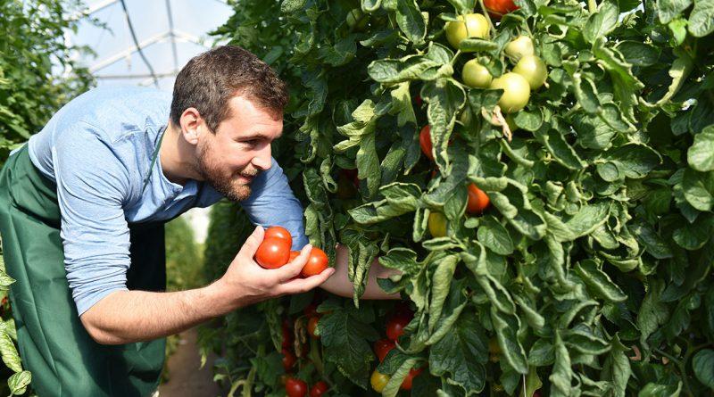 Ernährung, Landwirtschaft und Gartenbau auf der Internationalen Grünen Woche.