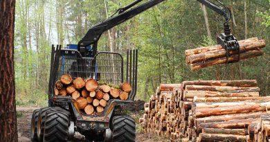Holz, Holzwirtschaft & Holzenergie.