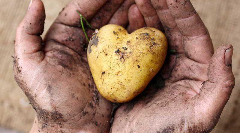 Herz für Gemüse und gesunde Nahrungsmittel.