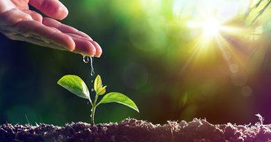 Gartenbau, Floristik, Saatgut, Planzen und Baumschulpflanzen gibts auf der IPM Essen.