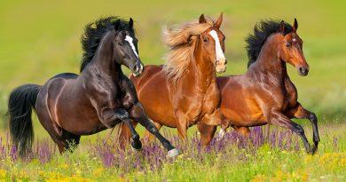 spoga+gafa/spoga horse (Herbst/autumn) 2018