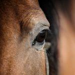 spoga horse 2019 • Messe Köln