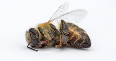 Bienensterben - CSU Politik Landwirtschaft Bayern