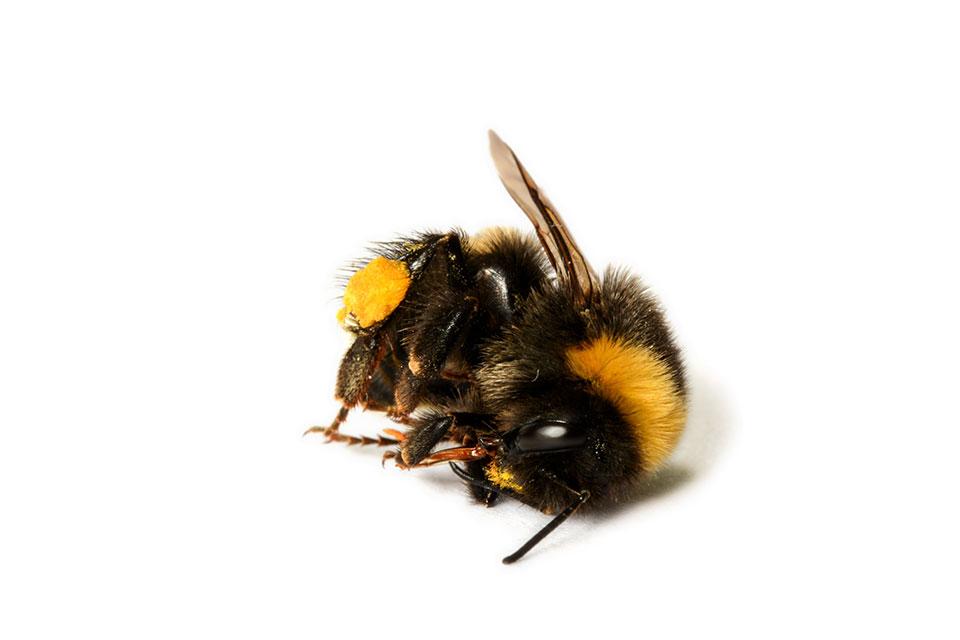 Insektensterben Landwirtschaft Bayern