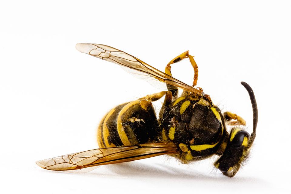 Neonicotinoide tote Insekten - Landwirtschaft Bayern