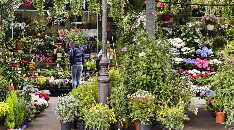 IPM ESSEN - Weltleitmesse des Gartenbaus